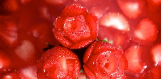 Διαβάσθηκε το DNA του τριαντάφυλλου - Μεγάλη συγγένεια με τη φράουλα