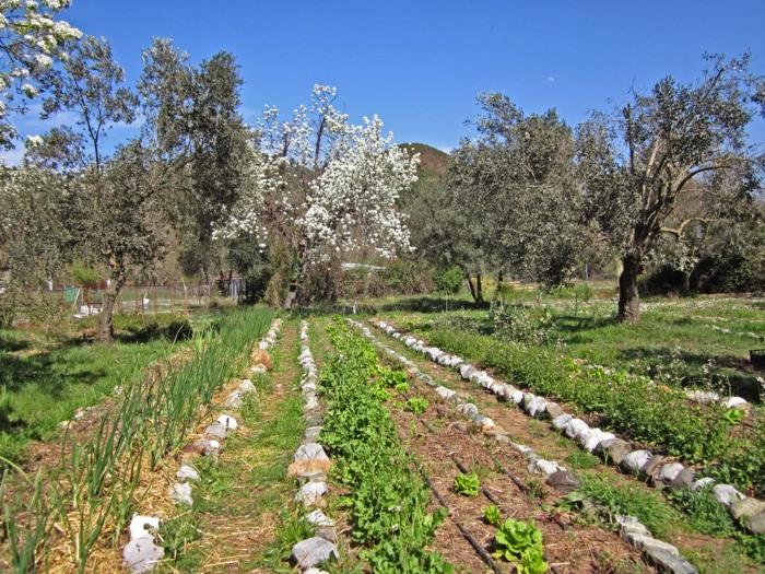 Παραδείγματα σημαντικών ή βέλτιστων πρακτικών που αφορούσαν την αγροδασοπονία με χρήση ελιάς