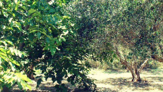 elia-sigkalliergeia