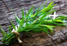 Εστραγκόν ή Αρτεμισία: Το βότανο με την ιδιαίτερη γεύση και το ξεχωριστό άρωμα