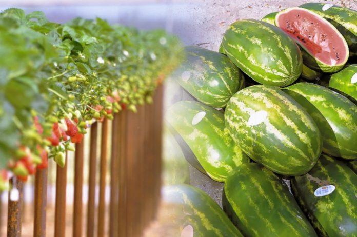 Σε ανοδική τροχιά ο τομέας τυποποίησης αγροτικών προϊόντων στην Ηλεία