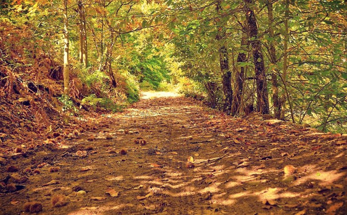 Στην περιοχή υπάρχει καστανόδασος άνω των 10.000 στρεμμάτων και το οποίο έμενε ανεκμετάλλευτο.