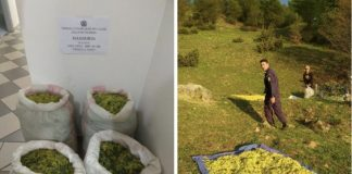 Η λεηλασία των βοτάνων συνεχίζεται - Σύλληψη δυο αλλοδαπών στην Ήπειρο