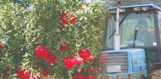Κωνσταντίνος Μπινιέρης: Άφησε την πόλη για να βρει το... ρόδι