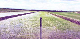 rizi-georgia-akriveias