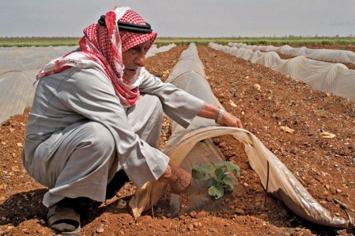 syria-agrotes