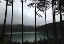 Προληπτική απαγόρευση κυκλοφορίας οχημάτων σε εθνικούς δρυμούς και δάση της Ηπείρου