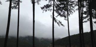 Επεκτείνεται το πρόγραμμα κοινωφελούς εργασίας για την αντιπυρική προστασία των δασών