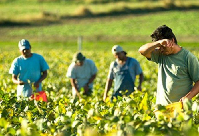 Βία, ρατσισμό και εκμετάλλευση βιώνουν οι μετανάστες εργάτες στον αγροτικό τομέα σε Ελλάδα, Ιταλία και Ισπανία