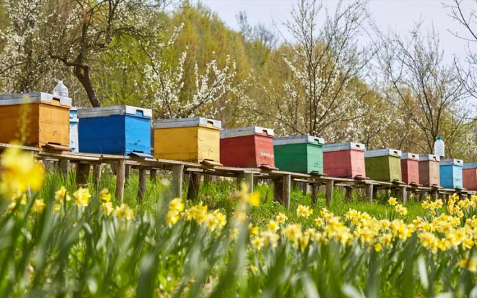 Ανακοίνωση της ΔΑΟΚ Λακωνίας για διαχείμαση και μελισσοκομικά προγράμματα