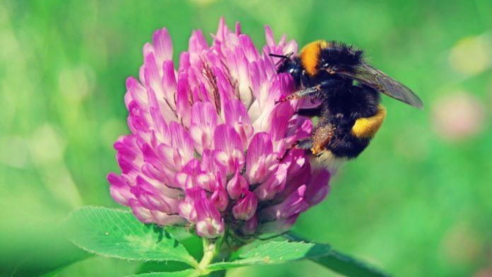 Με τον αριθμό των μελισσών να μειώνεται συνεχώς, η πρώτη ευρωπαϊκή στρατηγική για την αναστροφή του φαινομένου είναι γεγονός
