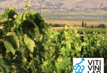 ΕΔΟΕΑΟ: Παράταση έως 15/11 της υποβολής συμμετοχής στον διαγωνισμό Viti Vini Lab