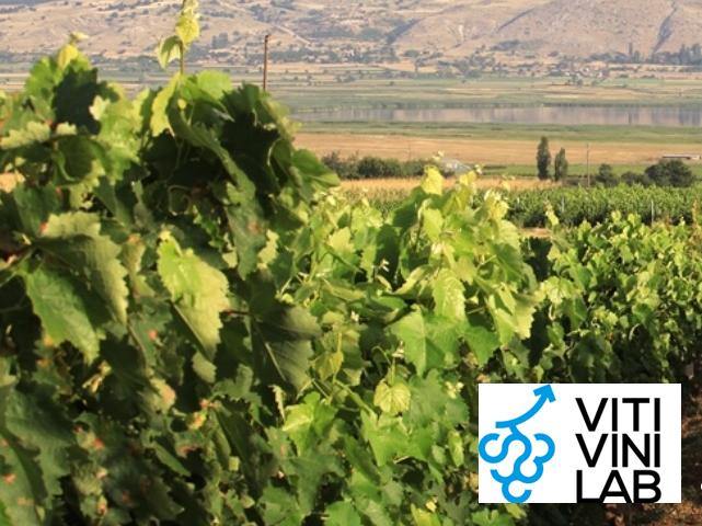 Στις 15 Νοεμβρίου λήγει η προθεσμία για τον διαγωνισμό Viti Vini Lab