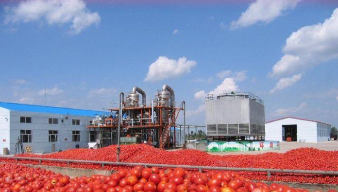 Ηλεία: Πολύ νωρίς η παραλαβή της ντομάτας