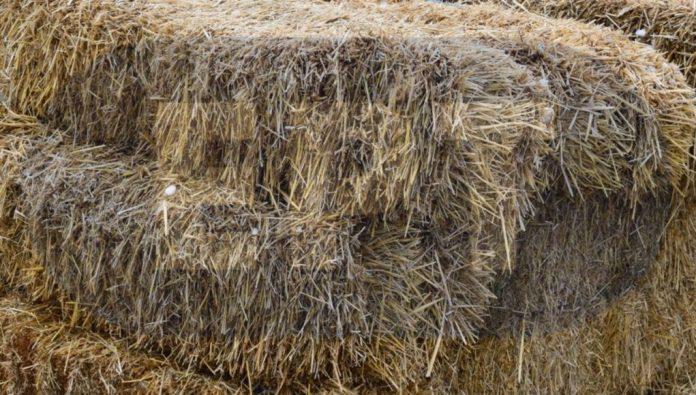 Το δυναμικό γεωργικής βιομάζας του B. Έβρου θα μελετήσει το ΚΑΠΕ