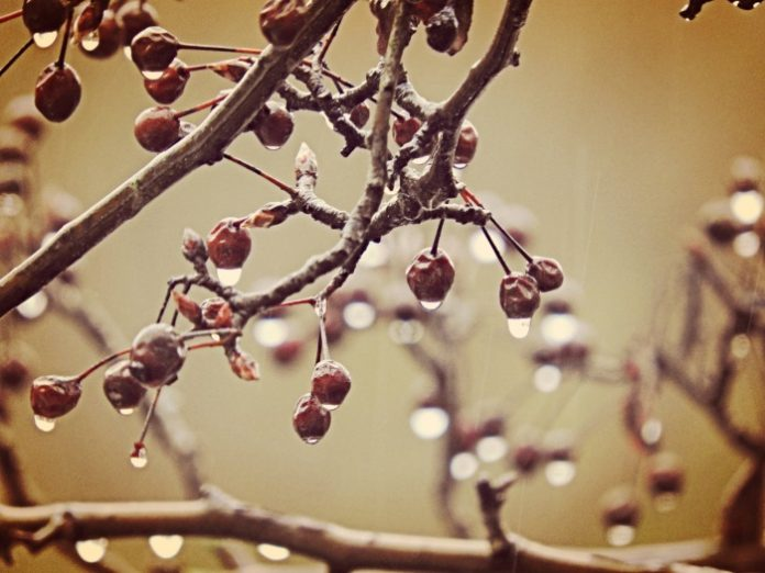 kerasi-cherry