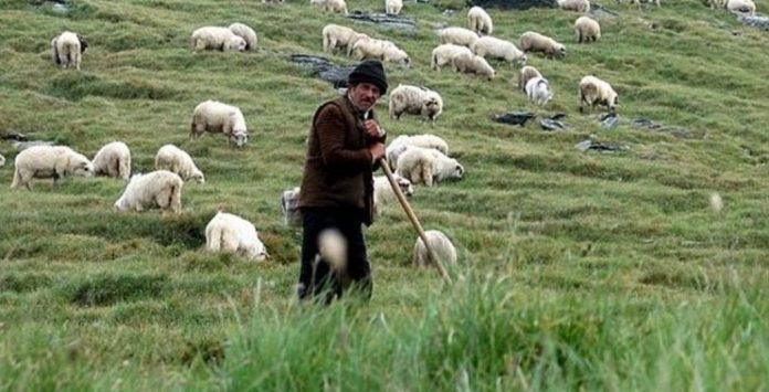 Κομοτηνή: Αναγκαία η στήριξη των κτηνοτρόφων