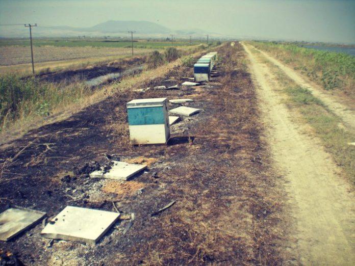 Μέτρα προστασίας από πυρκαγιές σε μελισσοσμήνη