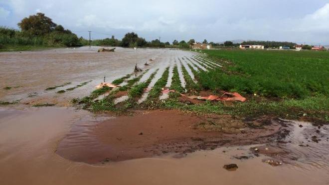 Ηλεία - Αχαΐα: Σημαντικές απώλειες παραγωγής σε γεωργικές καλλιέργειες από τις βροχοπτώσεις