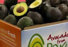 Πλημμύρισε η ευρωπαϊκή αγορά με αβοκάντο από Περού και Νότια Αφρική