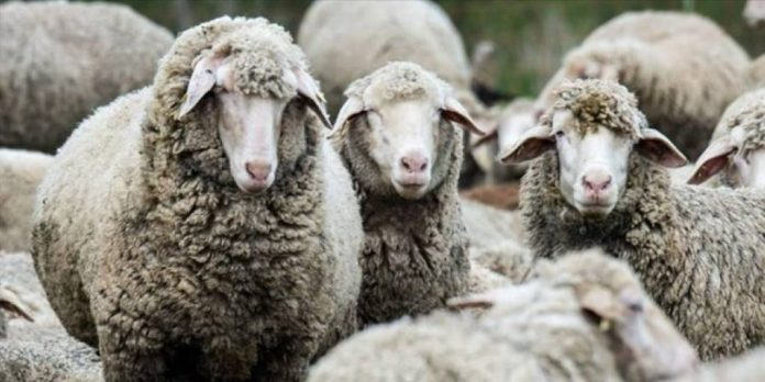 Σκάνδαλο με τις εισαγωγές γάλακτος βλέπουν οι κτηνίατροι της Ηπείρου