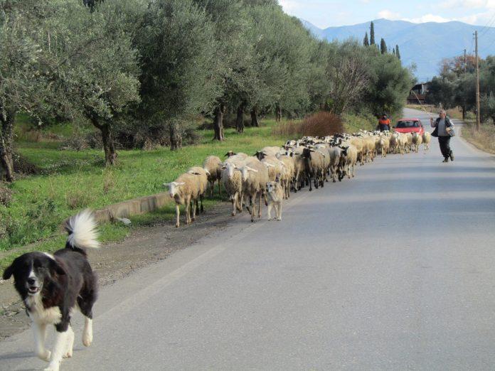 Γιόχαν Γκόλνταμερ: Για τις φωτιές φταίει ότι δεν υπάρχουν καλλιέργειες και πρόβατα