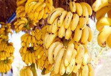 Κρήτη: Το 2ο φεστιβάλ μπανάνας στην Άρβη στις 10 και 11 Αυγούστου