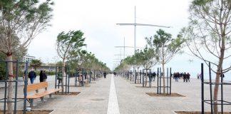 Μέτρα του Δήμου Θεσσαλονίκης για την καταπολέμηση εντόμου που προσβάλλει τα δέντρα