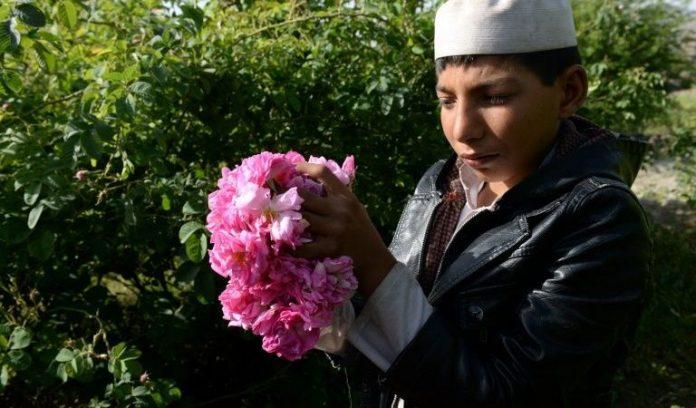 afganistan-triantafilo