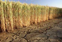 αγρότες που επλήγησαν από την ξηρασία