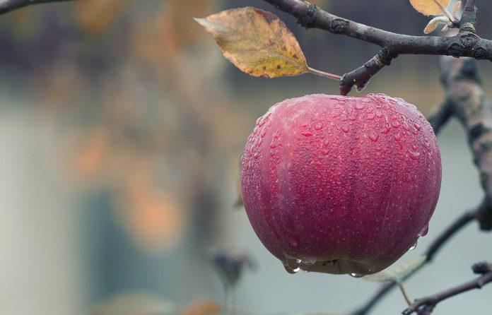 Φορτωμένες οι μηλιές, εκτιμήσεις για ρεκόρ παραγωγής