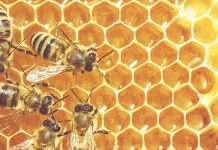 Τα οφέλη από τις μέλισσες