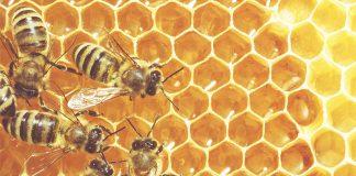 Σ. Αραχωβιτης: Με 21,7 εκατ. ευρώ μέσω ΠΑΑ ενισχύεται ο κλάδος της μελισσοκομίας