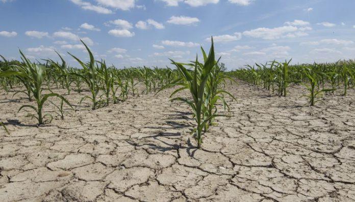 Κομισιόν: Νέα μέτρα για τους πληγέντες Ευρωπαϊους αγρότες λόγω λειψυδρίας