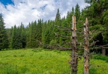 Για πρώτη φορά στην Ελλάδα ακουστικοί αισθητήρες τοποθετούνται σε δάσος στη Ροδόπη