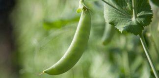 EurActiv: Καύσωνας και ξηρασία πλήττουν τον αγροτικό τομέα στην Ευρώπη