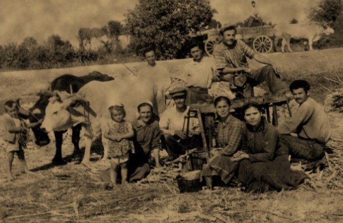 ΕΠΤΑ ΓΥΝΑΙΚΕΣ ΤΗΣ ΚΟΙΝΣΕΠ ΓΕΝΙΣΕΑ ΚΑΛΛΙΕΡΓΟΥΝ ΖΑΧΑΡΟΚΑΛΑΜΟ και παράγουν πετιμέζι από το οποίο Ιταλοί επιχειρούν να φτιάξουν ρούμι