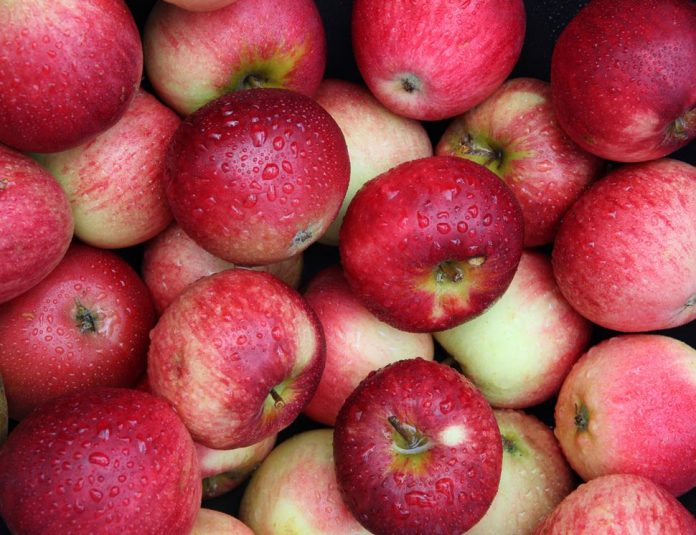 Μήλα: Οργάνωση και έλλειψη αποθεμάτων, ασπίδα στην πίεση των τιμών