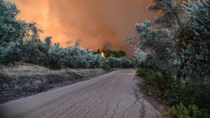 Επίσπευση διαδικασιών δασικής νομοθεσίας για τις περιοχές που επλήγησαν από τις πυρκαγιές της 23ης Ιουλίου