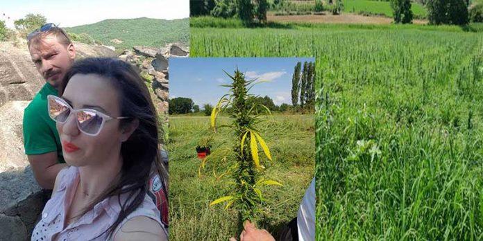 Στα Σέρβια Κοζάνης η πρώτη καλλιέργεια βιομηχανικής κάνναβης στη Δ. Μακεδονία