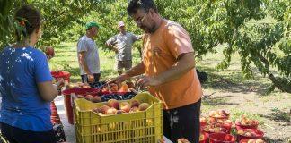 Το Μέτρο 16 καλείται να θεραπεύσει τις αδυναμίες συνεργασίας στον αγροτικό τομέα