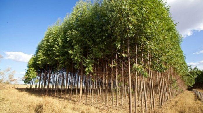 Πληρωμή ύψους 3 εκατ. ευρώ από τον ΟΠΕΚΕΠΕ σε δασώσεις και νέους αγρότες