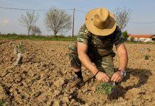 Από πότε ξεκινά να μετρά η ασφάλιση στον ΕΦΚΑ για νέες και εκκρεμείς αιτήσεις αγροτών
