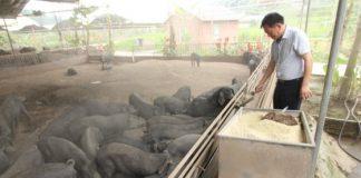 Διέξοδο στον μαύρο χοίρο εκτός από τους Έλληνες κτηνοτρόφους, βρίσκουν και οι Κινέζοι