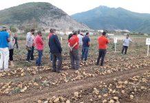 Με επιτυχία πραγματοποιήθηκε η εκδήλωση - έκθεση ποικιλιών πατάτας της Κ&Ν Ευθυμιάδης