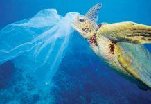 Έρευνα: Σχεδόν οι μισές χελώνες στους ωκεανούς έχουν φάει πλαστικό