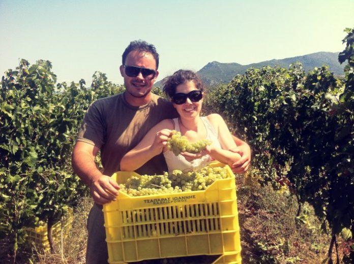 καλλιεργούν τα αμπέλια τους και να δημιουργούν κρασιά που αναδεικνύουν την προσωπικότητά τους.