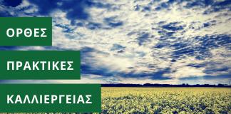 Καλλιέργεια ελαιοκράμβης: ορθές πρακτικές καλλιέργειας