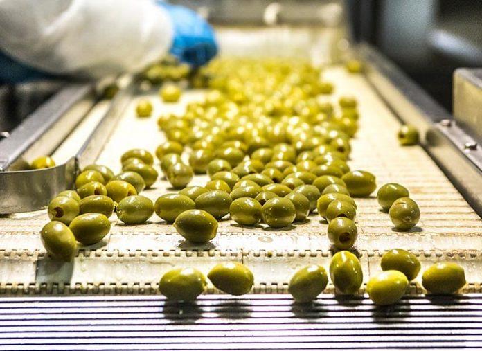 Με 1,55 ευρώ για τα 110 τεμάχια φεύγει η λειψή ελιά Χαλκιδικής