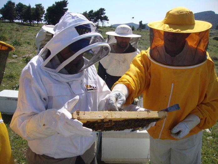 Καλά τα νέα για τους Έλληνες μελισσοκόμους